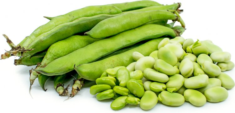 Growing Broad Beans From Seed – Planting Guide