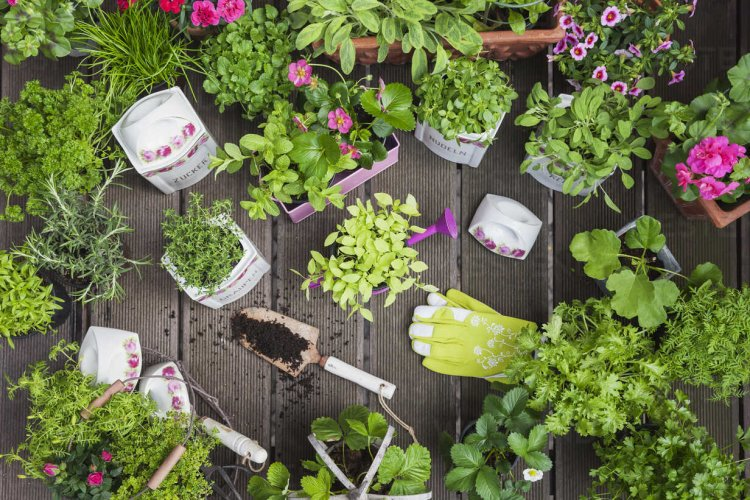 Indoor Flower Farming – Tips, Ideas, and Secrets