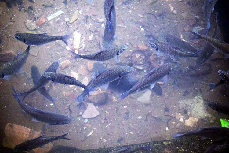 Aquaculture In Cambodia – A Full Guide