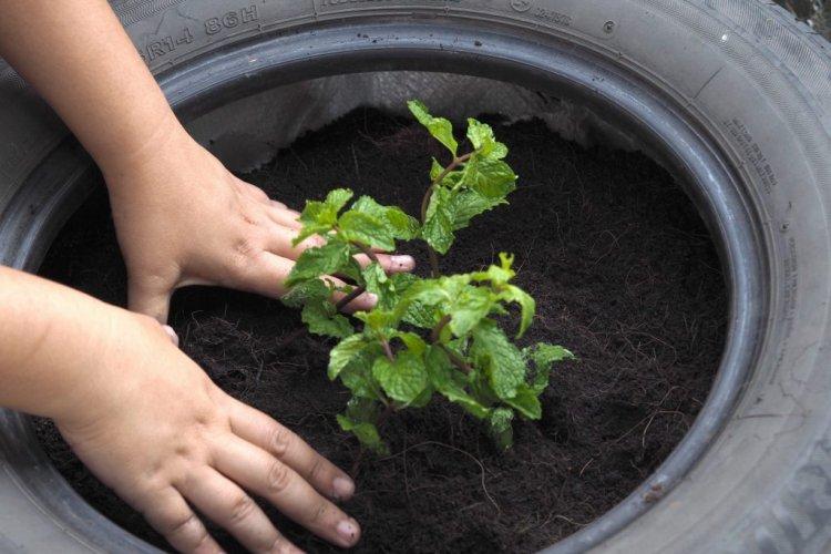 Using Old Tires In Garden – For Beginners