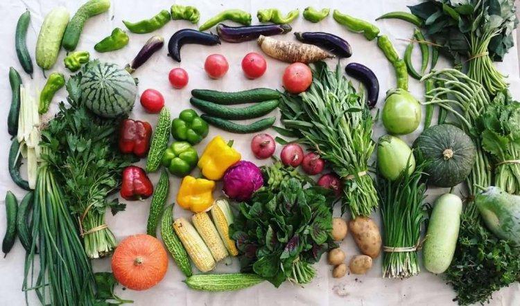 Vegetable Farming In Australia – Planting Season