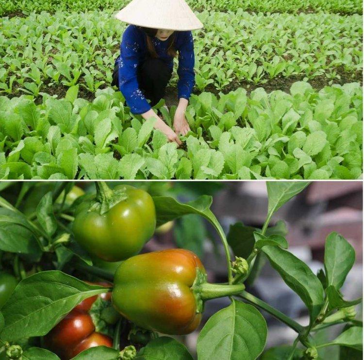 Vegetable Farming In Karnataka – Planting Calendar