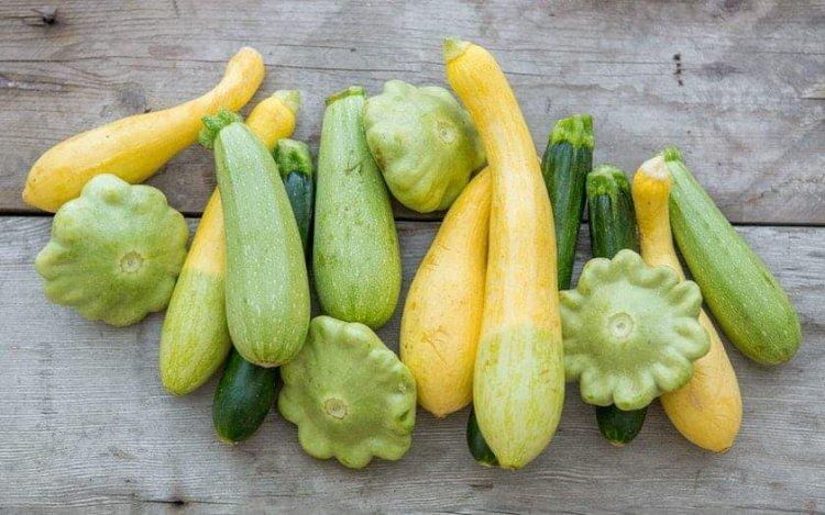 Growing Organic Squash – Farming, Planting Guide