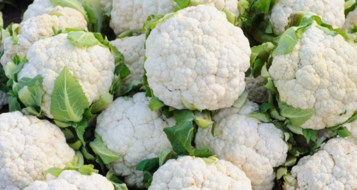 Cauliflower Farming in Polyhouse (Gobi) for Profit