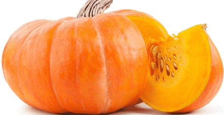 Pumpkin Farming in Polyhous for Profit