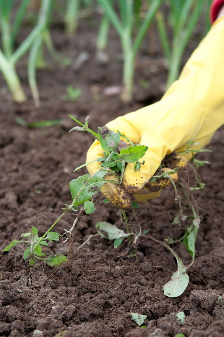 Vegetable Weed Control Methods – A Full Guide
