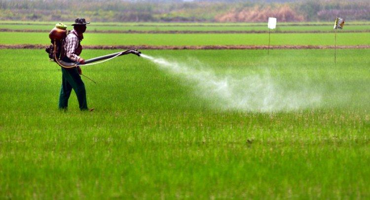 Agriculture In Sri Lanka, Major Crops, Soil Types
