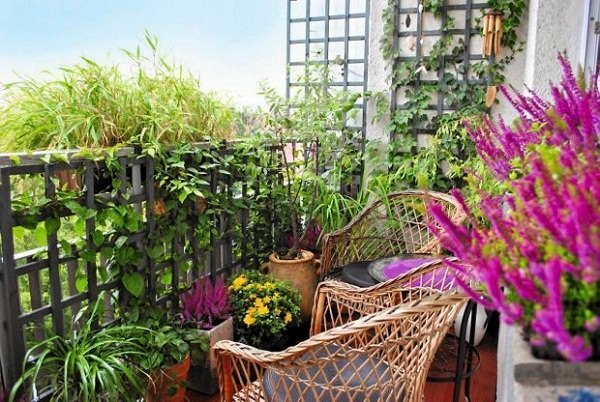 Apartment Balcony Garden Ideas For Beginners