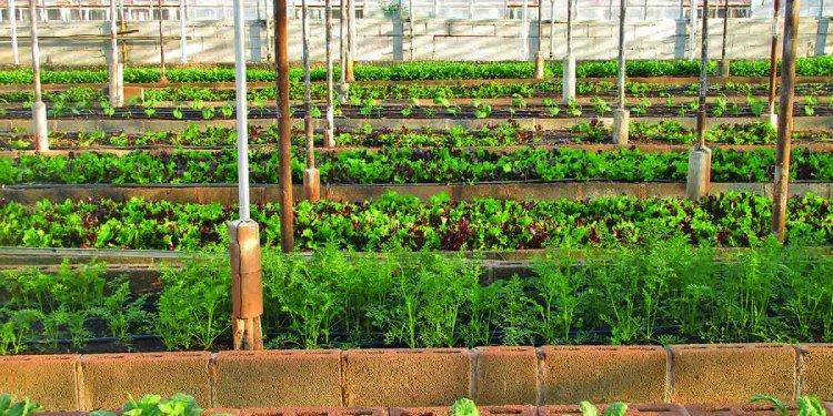 Aquaponics Farming Business Plan for Profits