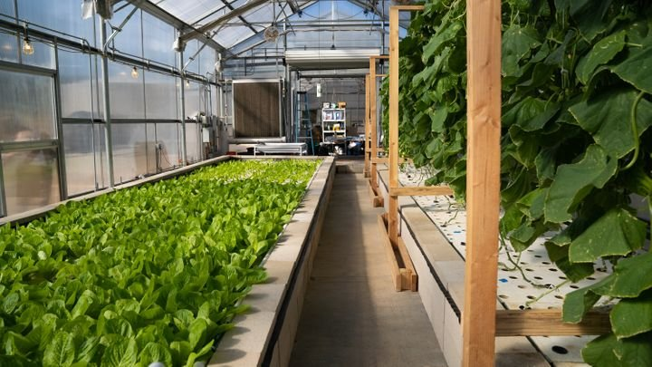 Aquaponics Farming in the Greenhouse – a Full Guide