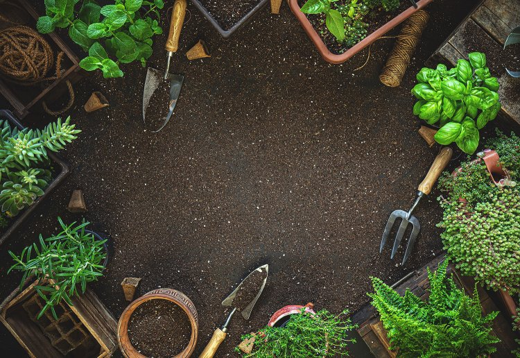 Backyard Herbs Farming – A Full Guide
