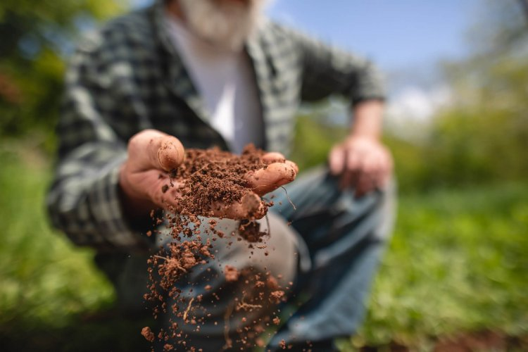 Clay Soil Treatment Methods – A Beginners Guide