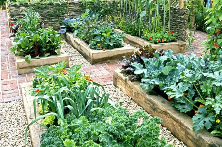 Commercial Raised Bed Farming – A Full Guide