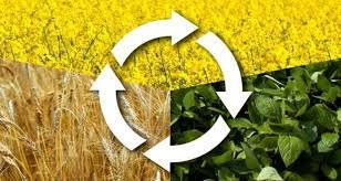 Crop Rotation in Organic Agriculture, Farming