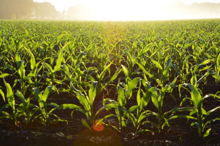 Crop Yield Improvement – Basics, Tips, And Ideas