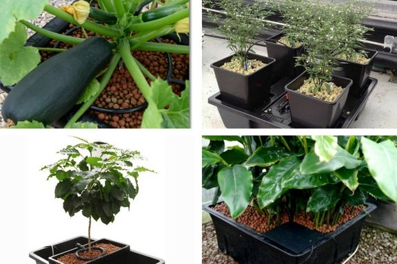 Hydroponic Drip System, Types, Advantages – a Full Guide
