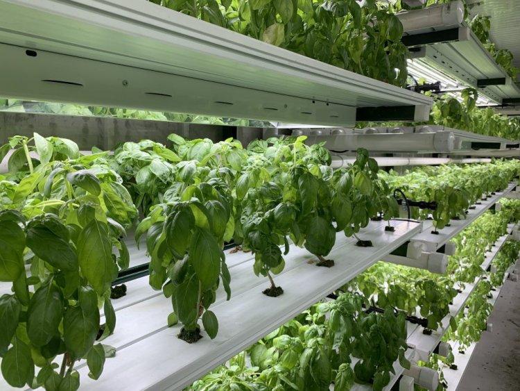 Hydroponic Farming Tips – Ideas, Benefits