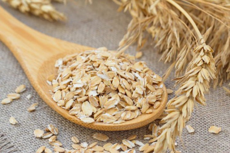 Oats Seed Germination, Period, Temperature, Process