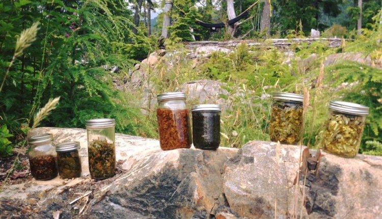 Organic Farming Of Medicinal Plants
