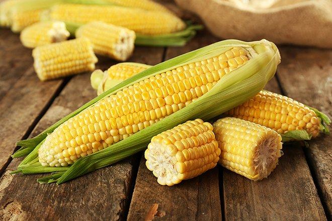 Organic Maize Farming, Cultivation Practices (Corn)