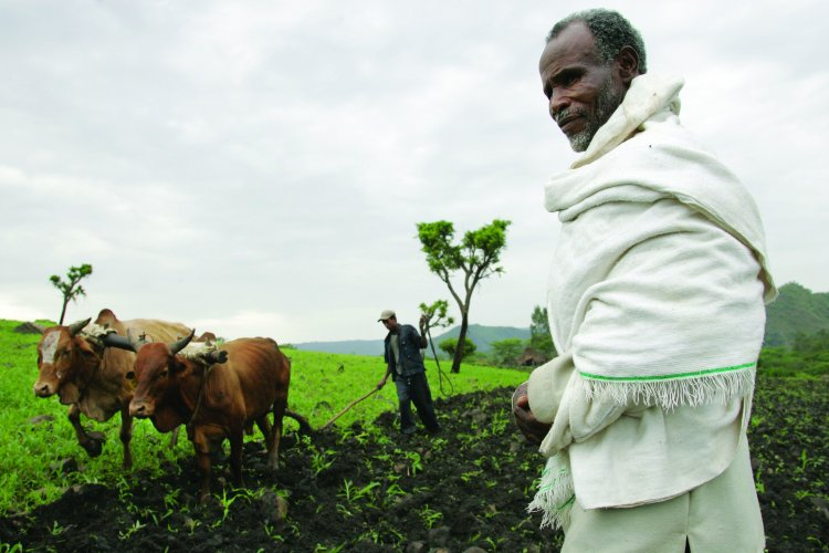Farming In Ethiopia, Agriculture Crops, Livestock