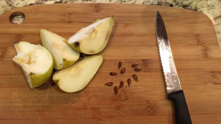 Growing Organic Pears – From Seed, Cuttings