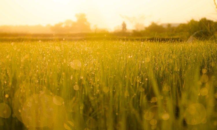 Regenerative Agriculture – Farming, Principles, Benefits
