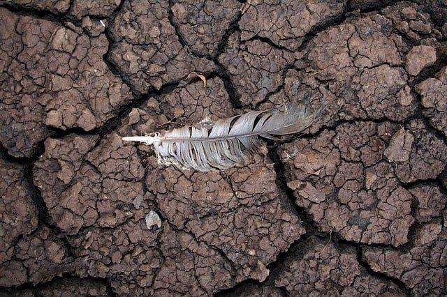 Soil Degradation Causes, Effects, Preventive Methods